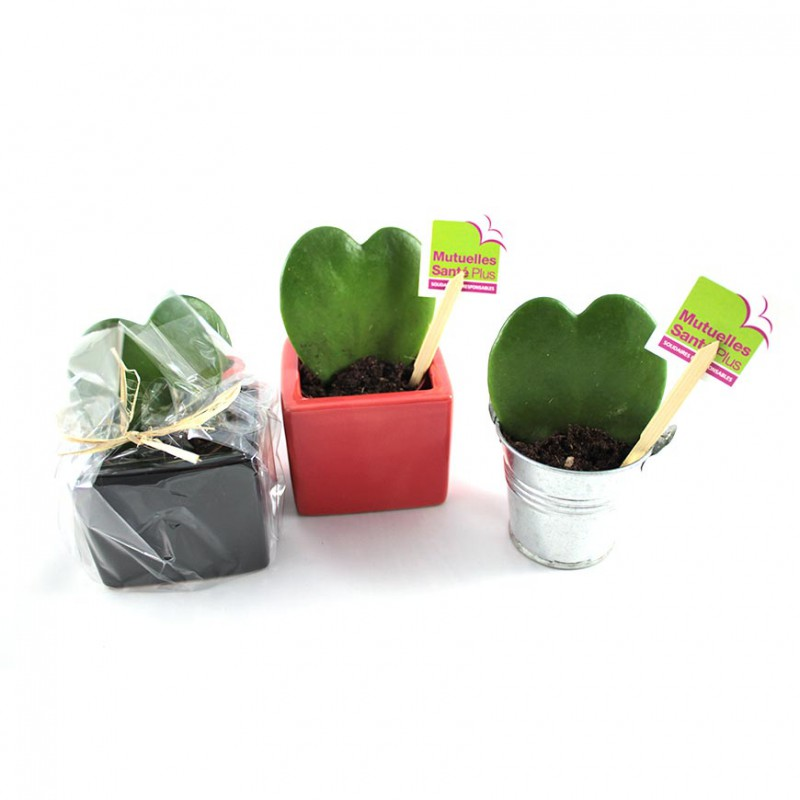 plante hoya coeur en pot personnaliser objet publicitaire nature. Black Bedroom Furniture Sets. Home Design Ideas