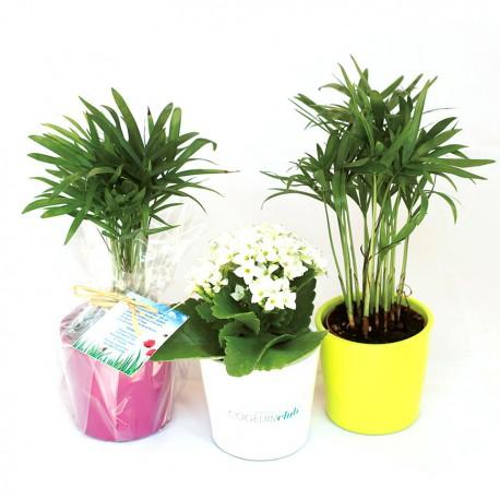 Plante publicitaire dépolluante en pot céramique rond 7 cm