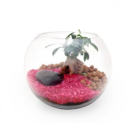 Terrarium Bonsaï Ficus Ginseng publicitaire personnalisé - Grand modèle