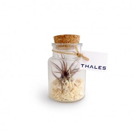 Plante Tillandsia en flacon publicitaire personnalisé petit modèle