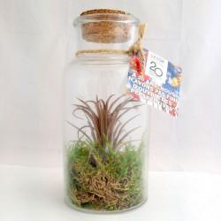 Plante Tillandsia en flacon publicitaire personnalisé grand modèle