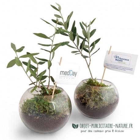 Plant d'olivier en globe de verre personnalisable - Terrarium olivier
