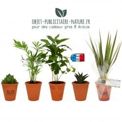 Plante publicitaire de bureau en pot terre cuite 10cm