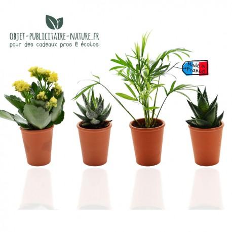 Petite plante publicitaire de bureau en pot terre cuite 6 cm