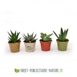 Petite plante dépolluante de bureau en pot bambou 6 cm personnalisable
