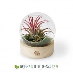 Terrarium globe en verre personnalisable avec socle en bois