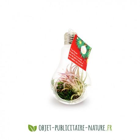 Terrarium personnalisé en forme d'ampoule en verre avec plante tillandsia