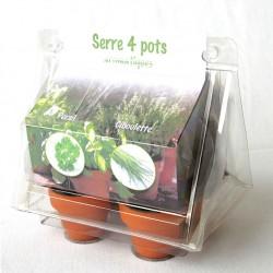 Serre 4 pots terre cuite avec sachets graines fleurs légumes arbres