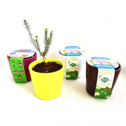 Kit de plantation pot céramique rond 7 cm impression sur fourreau