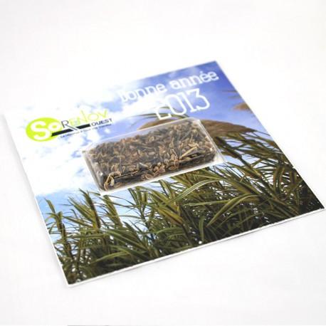 Carte voeux carrée 10x10 cm avec capsule de graines au choix