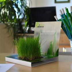 Carte graines gazon à faire pousser au bureau