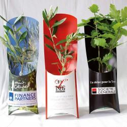 Plant d'arbre en étui personnalisable - Pin, Olivier...