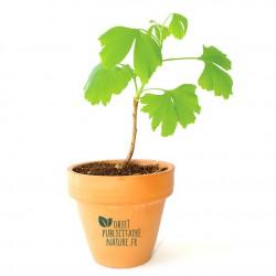 Plant d'arbre publicitaire en pot terre cuite personnalisable