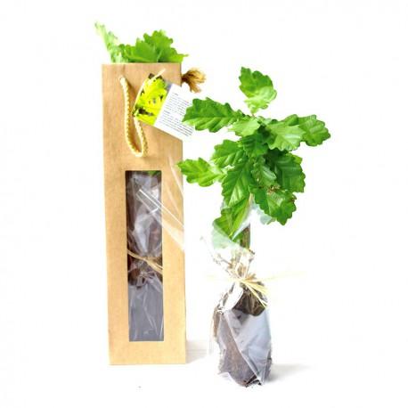 Arbre chêne en sac kraft fenêtre avec étiquette personnalisable