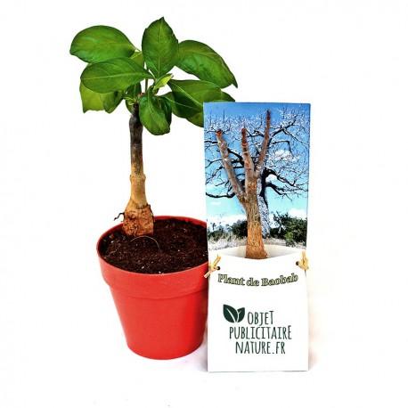 Plant de Baobab en étui à personnaliser