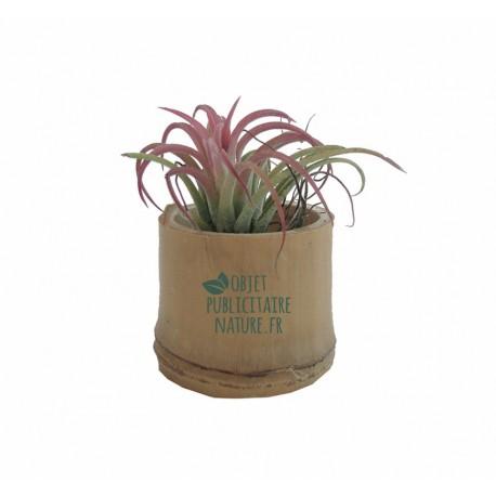 Plante publicitaire Tillandsia en pot bambou personnalisé