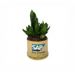 Plante publicitaire en pot bambou personnalisé par gravure ou adhésif
