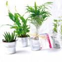 Petite plante dépolluante de bureau en pot zinc 6 cm