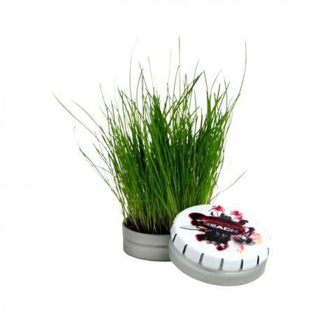 Mini kit de plantation publicitaire en boîte métallique Clic-Clac