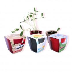 Kit de plantation publicitaire avec pot en bambou biodégradable