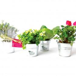 Petite plante fleurie en pot zinc 6 cm personnalisable