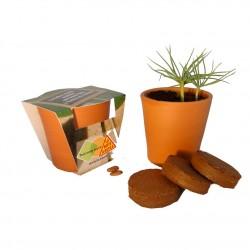 Kit de plantation publicitaire en pot terre cuite grand format 10 cm