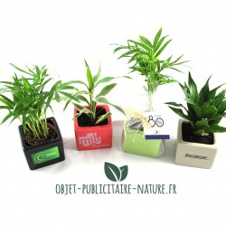 Petite plante dépolluante en pot céramique carré