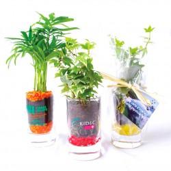 Plante publicitaire dépolluante en verre personnalisé avec graviers colorés