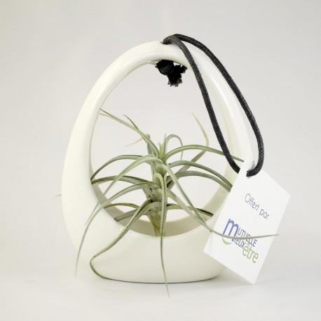 Plante Tillandsia en pot ceramique personnalisé par étiquette - Objet Publicitaire Nature