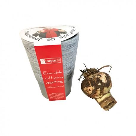 Bulbes de Noël en kit de plantation publicitaire à offrir pour les fêtes ou Noël.