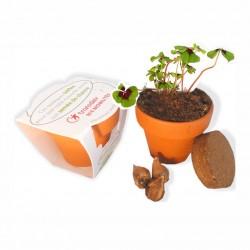 Trèfles à 4 feuilles - kit de plantation publicitaire pot terre cuite