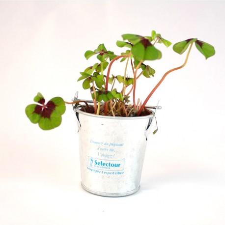 Trèfles à 4 feuilles poussé en pot zinc 10 cm personnalisé