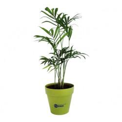 Arbre publicitaire en pot bambou 10cm personnalisé