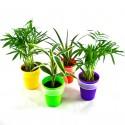 Plante en pot ventouse avec étiquette publicitaire imprimée