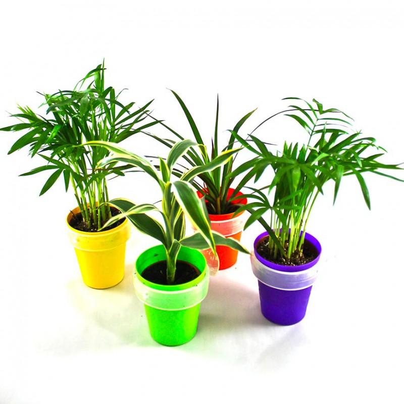 plante en pot ventouse avec tiquette objet. Black Bedroom Furniture Sets. Home Design Ideas