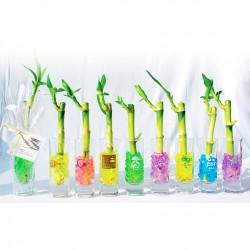 Canne chinoise - Bambou publicitaire en vase verre