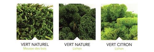 Logo végétal mousse naturelle